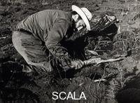 Korda (Diaz Gutierrez, Alberto, 1928-2001) Fidel Castro plantant des pins