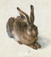 Duerer, Albrecht (1471-1528) Lepre